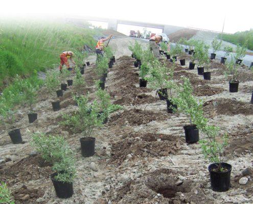 Sotramex - plantation arbres et arbustes