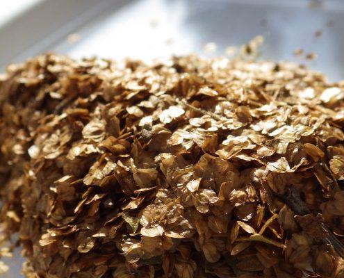 Sotramex - semences arbustives